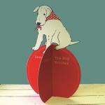 A shaggy dog story