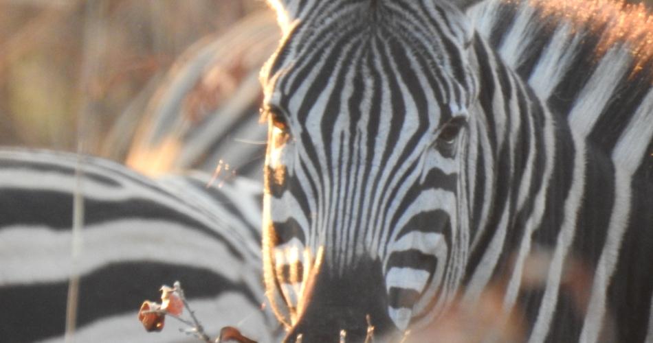 Image 1: Lush Safaris LTD