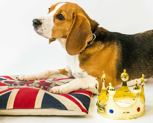 Homeless pets pipe up for royal wedding