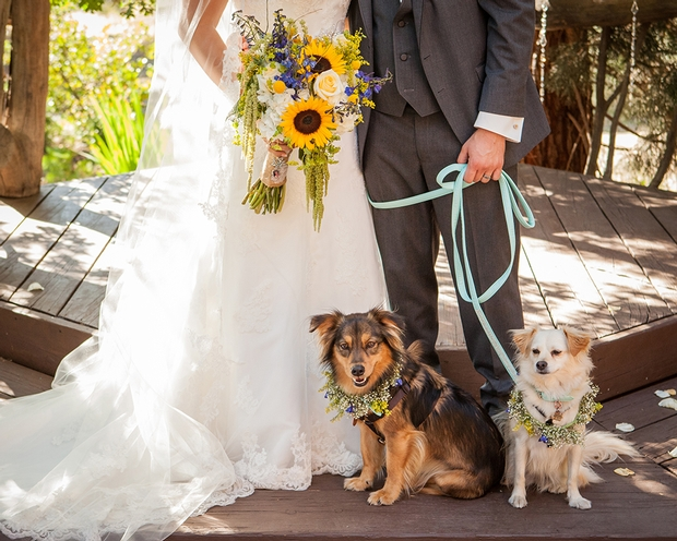 How to involve your dog in the wedding day and beyond
