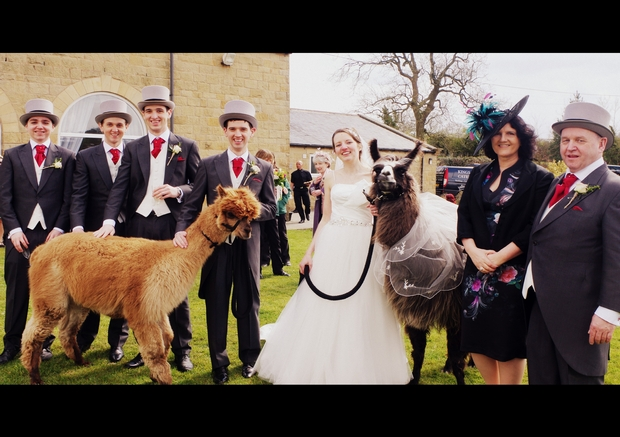 We chat to North Yorkshire's Nidderdale Llamas about the newest wedding craze!