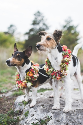 Want to involve your dog in your wedding? We ask Mendip Dog Walking for some advice