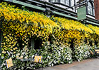 Bridal designer Jenny Packham partners with The Ivy Chelsea Garden restaurant to create show-stopping floral installation