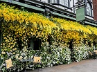 Jenny Packham partners with the Ivy Chelsea Garden