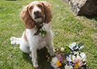 How to include your fur baby in your wedding - with Beverley's Wedding Woofers