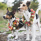 Your Pawfect wedding
