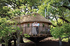 Honeymoon in a Devon treehouse