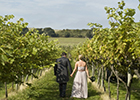 Vineyard Venue for Perfect Wedding