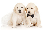 A dog is for life – including your wedding