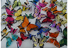 Brand new butterflies launched by Dudley-based www.e-crafts.co.uk