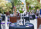Liverpool's premier wedding venue Palm House Sefton Park set to host fundraising dinner