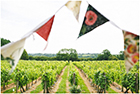 Enjoy a tour of the Glyndwr Vineyard this Christmas