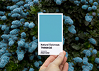 Feeling blue? You need some Natural Optimism Twinings Infusions partners with the Pantone Color Institute