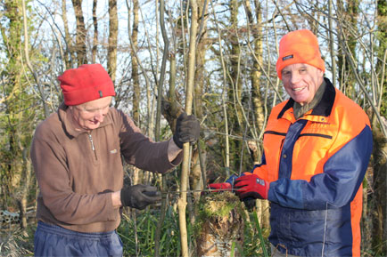 Walking stick specialist Classic Canes commences its 30th harvest