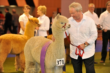 A day out with Alpaca's!
