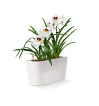 Lechuza self watering pots launch in the UK