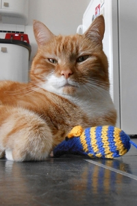 Feline like knitting for a good cause?