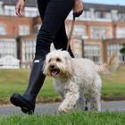 Dog-friendly escapes with De Vere