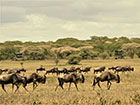 Honeymoon glamping in Tanzania
