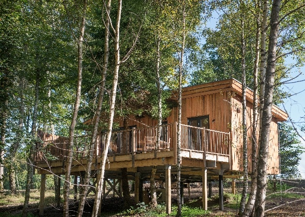 house in the trees tree house