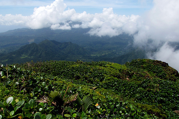 Discover Dominica: Image 5