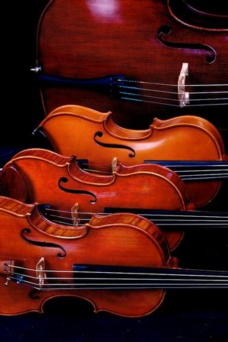 Entertainment - Northern String Quartet