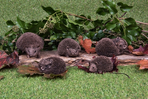 Friths Hedgehog Family