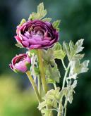 Mezu Silk Flowers
